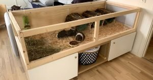 Clean wooden guinea pig cage