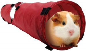 Long tunnel made of red polyester fabric for guinea pigs