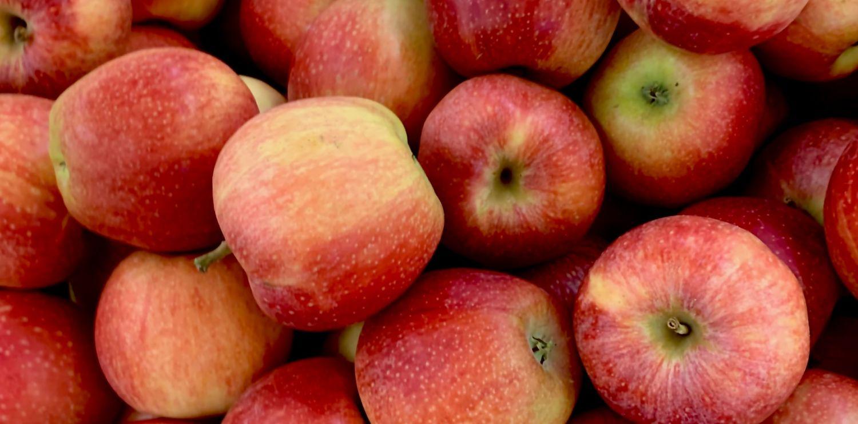 Fresh, crispy red apples