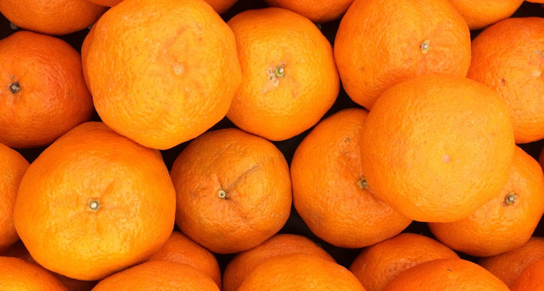 A pile of freshly picked oranges